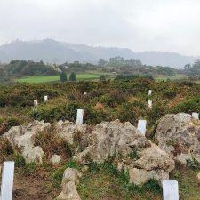 El proyecto que Bosquia desarrolla en Llanes acometerá su quinta actuación el 23 de marzo