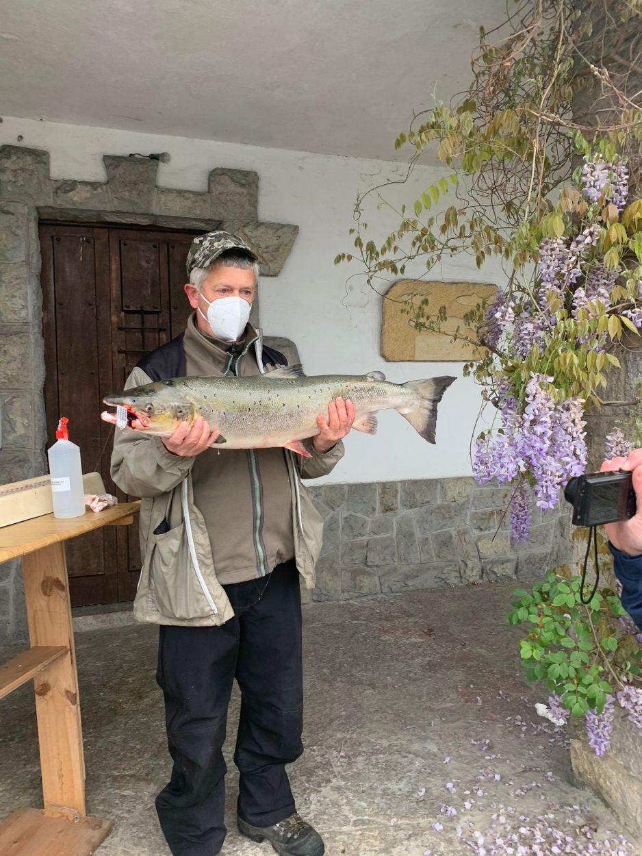 El Campanu 2021 sale en el Eo. El primer salmón del Sella es capturado en Remolina y el del Cares en La Concha