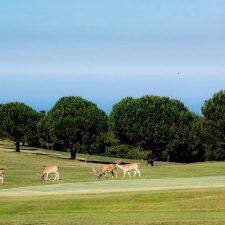 El campo de golf de Ribadesella vive el mejor momento de su historia, con mas jugadores que nunca en temporada baja