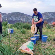 Sextaferia ganadera para recuperar la superficie quemada en el monte Río Nueva de Llanes