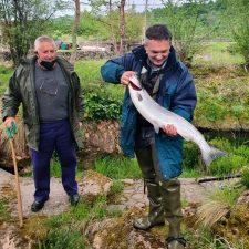 Los rios salmoneros asturianos entregan 8 piezas durante el fin de semana