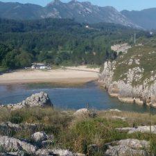 Un particular promueve la plantación de 19 Has de eucalipto junto a la playa de Cuevas del Mar, en Nueva (Llanes)