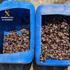 Interceptados mas de 17 kilos de percebes a unos furtivos en Pimiangu (Ribadedeva)
