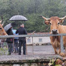 Poco ganado y muchos paraguas en la Feria de San Mateo de Benia de Onís