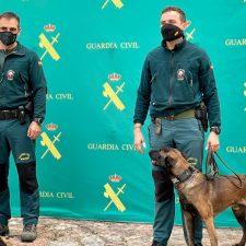 El GREIM de Cangas de Onís incorpora un nuevo agente. Se llama Segres y es un perro adiestrado en la búsqueda de personas vivas