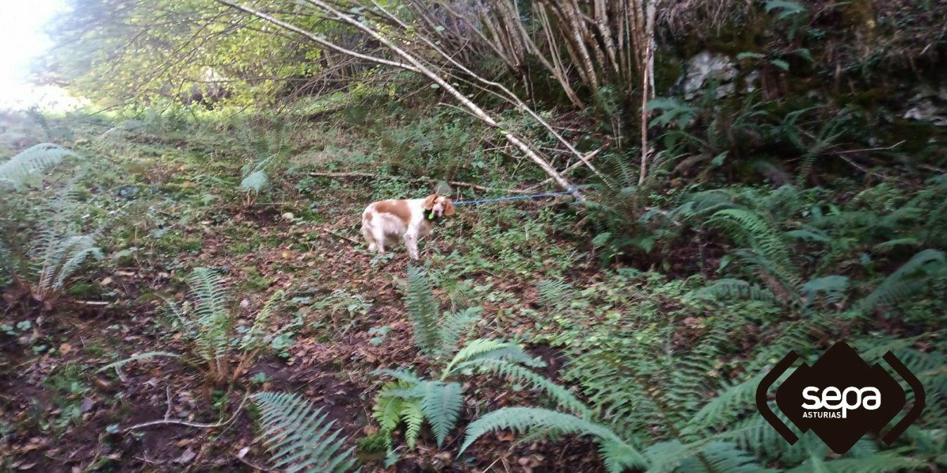 Rescatada en Parres una perra de caza que sufrió una caída por un terraplén de 40 metros